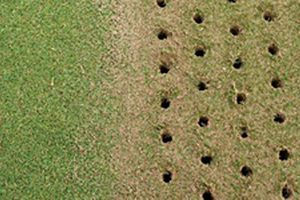 Core Aeration & Overseeding