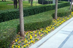 Landscaping in St. Joseph IL
